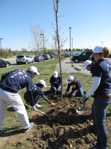 Tree Planting in Colorado